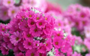 flowers_lagrpictures